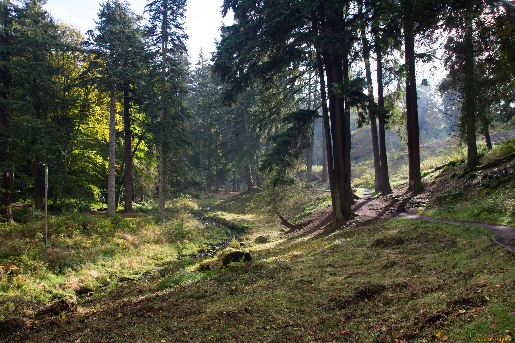 картинки лесные просторы рассказывала, что именно